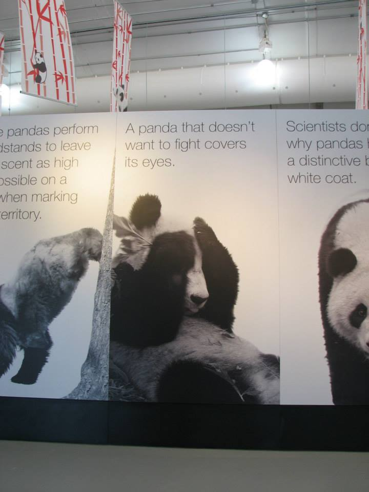 Anything that still wants to pick a fight with a panda who has covered its eyes - just doesn't have a soul.