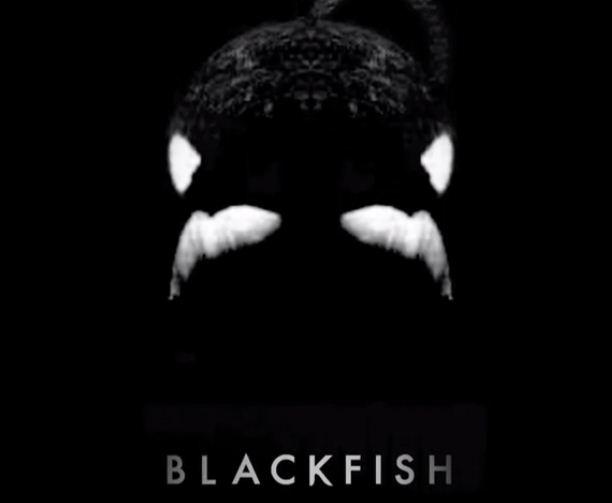 Blackfish1