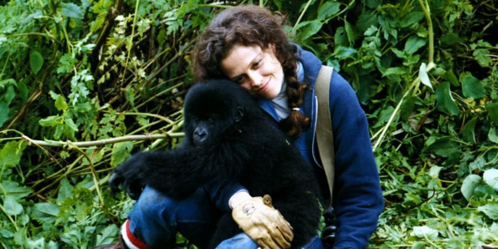 film__2824-gorillas-in-the-mist--hi_res-7247ef41